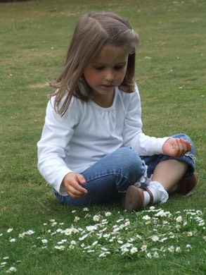 D Nonsuch Picking daisies
